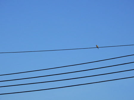 bird on electric wire with blue sky background Stockfoto
