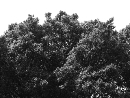 black and white tree on white background Stockfoto