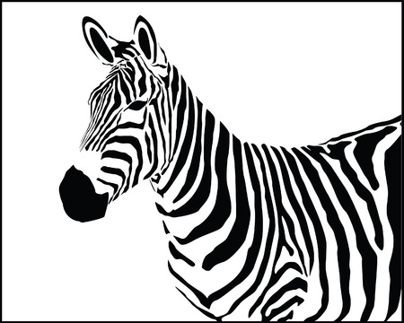 Vector illustration of zebra Vector