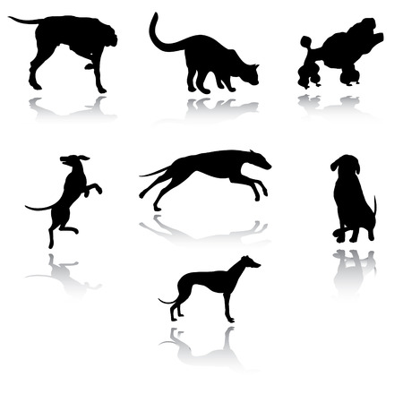 persian cat:  Dogs and cats silhouettes Illustration