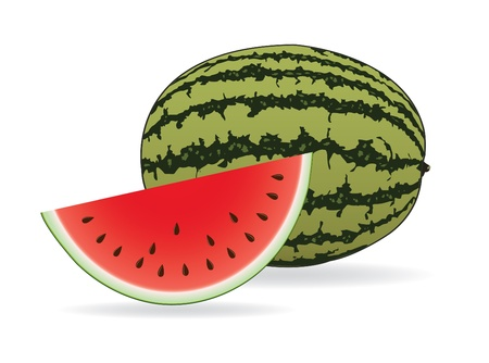 seeds: Watermelon Illustration