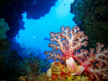 View from the inside of a swim through looking out past beautiful soft corals. Фото со стока