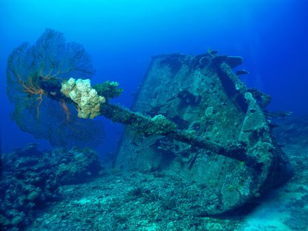 gorgonian: A look at the bow section of the MV Belama Shipwreck.