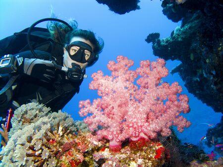 Een duiker krijgt in dicht bij een mooie zachte koraal