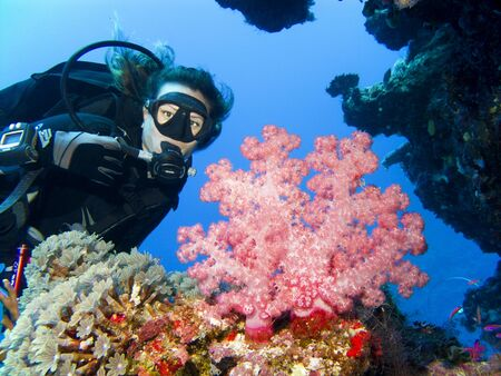picada: Un buzo obtiene cerca de un hermoso coral blando