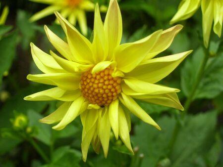yellow flower Imagens