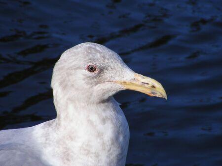 sea gull close up Imagens