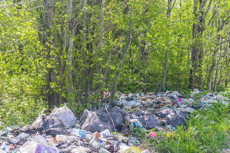 disturbance: A dump in the woods