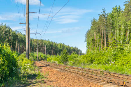 forest railroad: Railroad in the forest Stock Photo