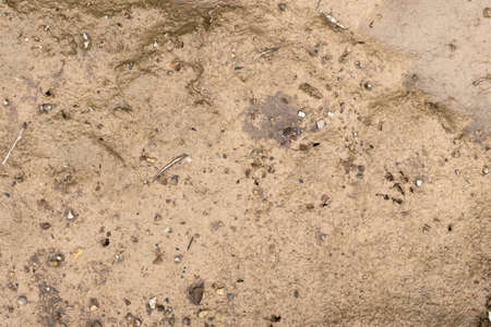 The texture of the mud that formed after rain, interspersed with pebbles.
