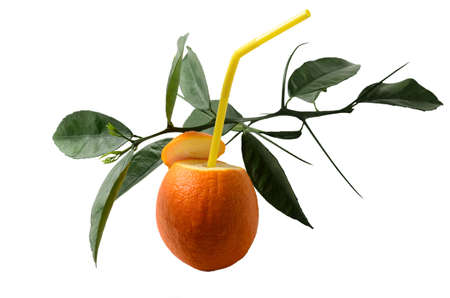 Natural orange juice. Oranges with a drinking tube and a sprig with green leaves. Isolated on white. Selective focus.