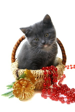 Little kitten in a basket with Christmas toys on a white background.