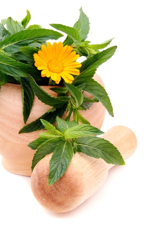 Leaves of mint and marigold(calendula)  in mortar on a white background Stock Photo - 14166496