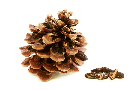 disclosed: Disclosed pine cones and seeds on white background