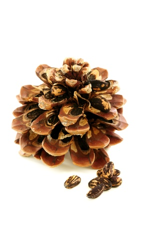 disclosed: Seeds and disclosed pine cone on a white background  Stock Photo