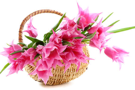 Pink tulips in wicker basket on a white background   photo