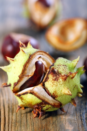 conker: Opened conker on an old wooden board. Stock Photo