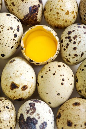 Colorful quail eggs and broken egg with two yolks. photo