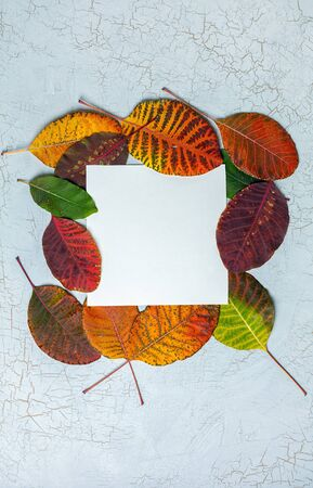 Nature frame. Layout made of colorful autumn leaves with place for text. Top view. Flat lay.