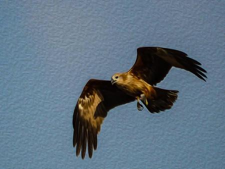 oil painting black hawk on blue sky. Stock Photo - 117513696