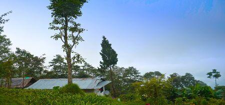 Rishop Landscape