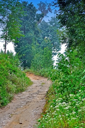 Clay stone road in Jungle,green trees,blue sky
