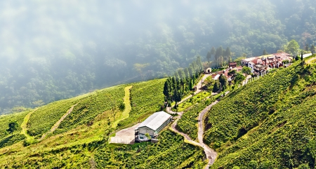 View from Darjeeling city, Queen of Hills, Tea plantation and garden, West Bengal, India,