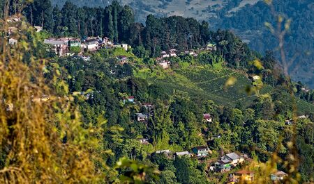 View of a part of Darjeeling City with green trees, tea plantation and gardens Stock Photo - 14882294