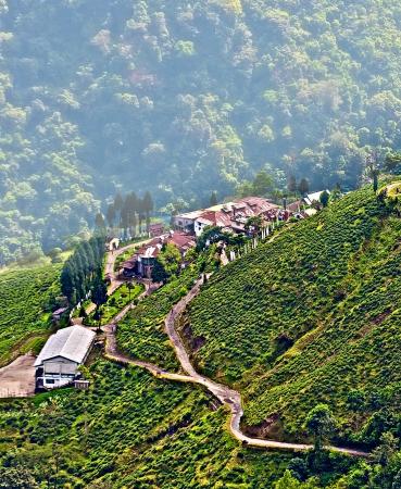 darjeeling: View from Darjeeling city, Queen of Hills, Tea plantation and garden, West Bengal, India,