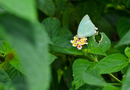 Butterfly Stock Photo - 15040263