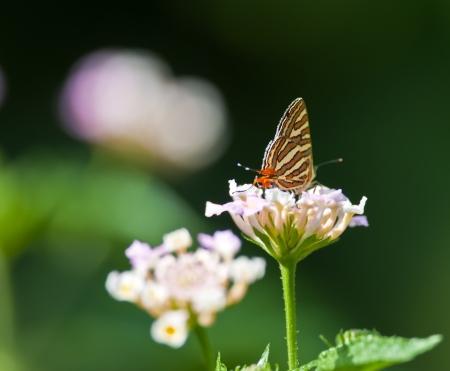 silverline: Butterfly