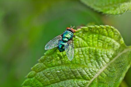 Fly Stock Photo - 15040283
