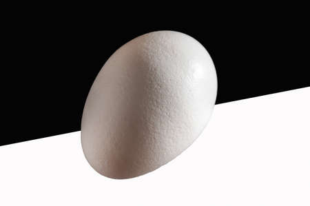 White eggs, on black and white, front lit, isolated, background, copy space photo