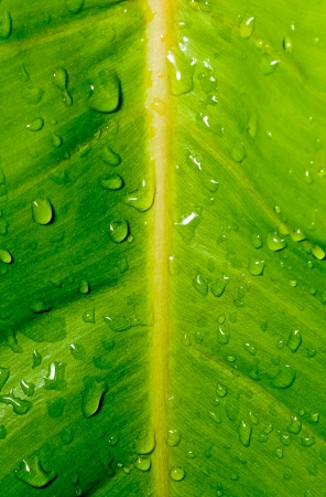 Drops, droplets of water on green leaf, fresh, natural, close up, macro