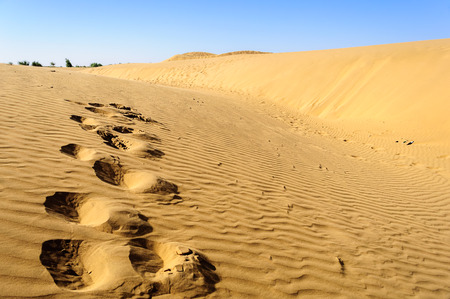 Footprints of camel on Sand dunes, SAM dunes of Thar Desert of India with copy space
