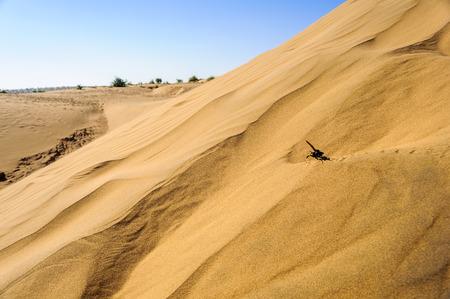 Sand dunes, SAM dunes, Desert National Park of Thar Desert of India with copy space