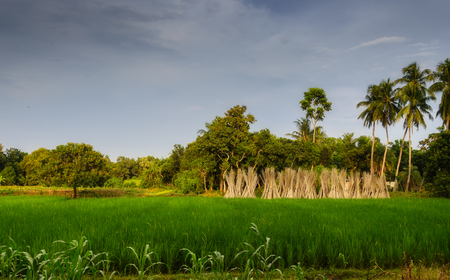 Typical idyllic landscape of a village of Bengal with copy space Stock Photo