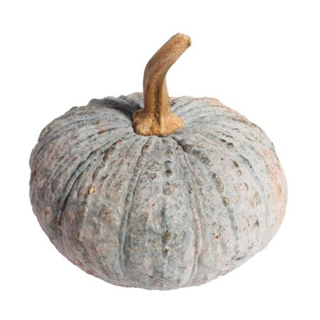 enriched: Pumpkins are high in fiber Enriched with vitamins and anti mixing with oxygen and minerals and Acid Pro Pioneer Nick this acid causes cancer cells to weaken.