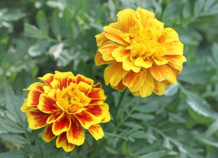 beliefs: Marigold garlands using various types of worship and sacred beliefs.