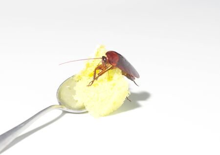 Cockroaches are eating snacks Which is a vehicle for various pathogens And is offensive