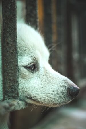 Pet looking outside from home gate.While everyone is staying indoors during the Coronavirus lockdown with our pets. Being locked inside is not easy for anyone, especially our four-legged friends