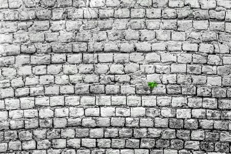 White brick wall with little plant. Background of white brick wall pattern texture.Seamless texture old brick wall
