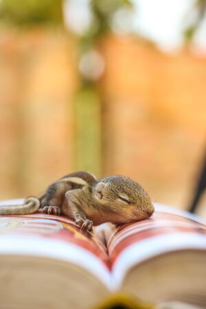 Baby squirrel sleeping on Book of Zoology, Common indian baby squirrel sleeping on the book. Blur background.