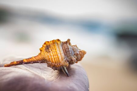 Seashell in the human hand on the background of beach and sea - (shallow DOF). Beach with conch seashell under blue sky at sunrise. Single shell on hand . Stock Photo