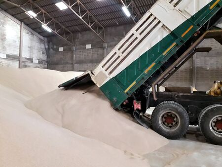 A stack of bulk brown urea fertilizer and trucks are pouring the fertilizer out of the pickup truck. Within the warehouse for storage