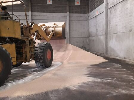 Orange loaders and large Cream color urea fertilizer in the warehouse.