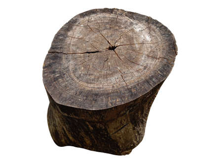 Brown tree stump Cut into large circles on the White Background