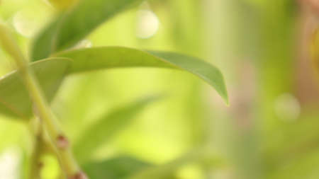 Blurred flower focus background, green leaves, multicolored