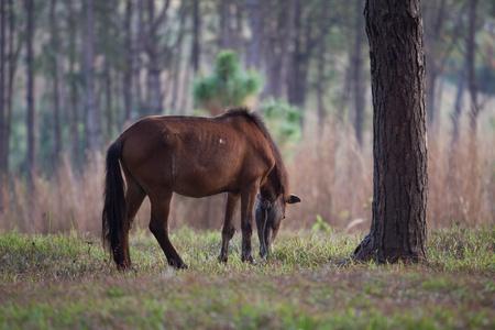pastureland: Grazing horses