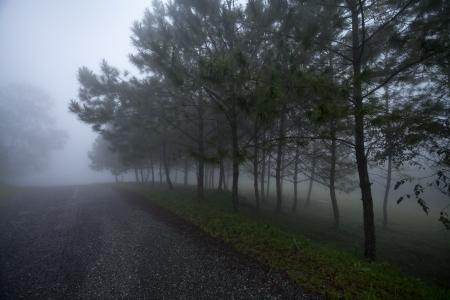 moody sky: Tree in fog
